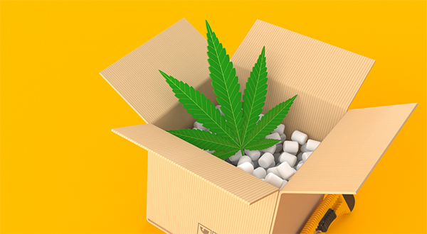 cannabis packaging 2024